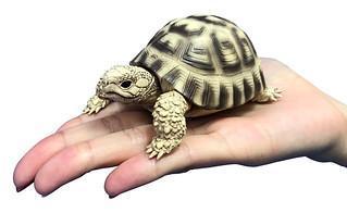 萬代轉蛋 GASHAPON 新作『團子蟲(鼠婦)圓滾滾吊飾版』、『團子蟲  第4彈』、『龜』等新情報公開!