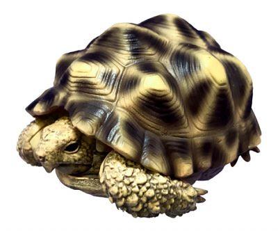 再現縮殼的衝擊機構!GASHAPON 轉蛋新作『烏龜(かめ)』預計 12 月登場!