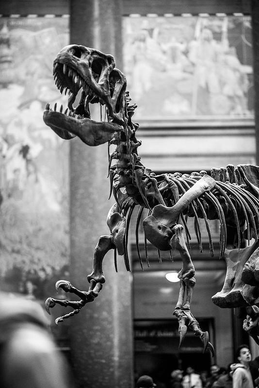 Natural History Museum NY