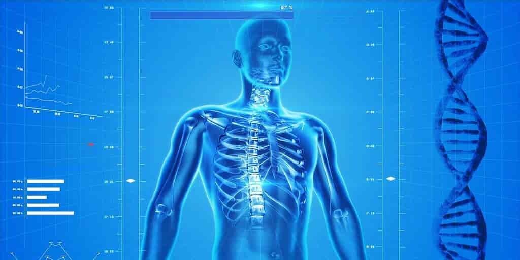 cellules-spuches-midifiées-dans-corps-humain