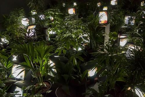 Nam June Paik TV Garden 1974-7 (2002)