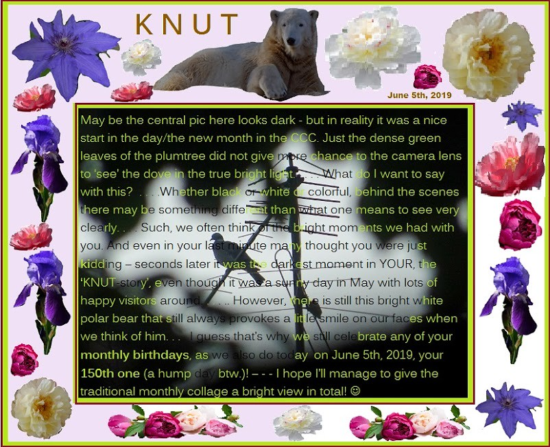 KNUT_150thMonthly_5June2019_COLLAGE_Mi_14h30_190605