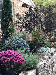 Garden #5