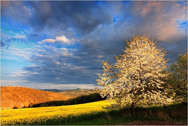 Blühendes Land