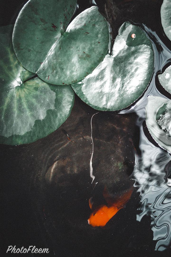 โทนกรีนไนท์แมร์ ภาพธรรมชาติแนวดาร์ก แอพ Lightroom