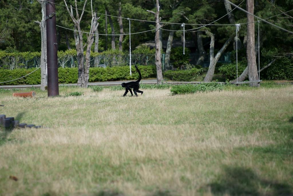 海ノ中道海浜公園のクモザル