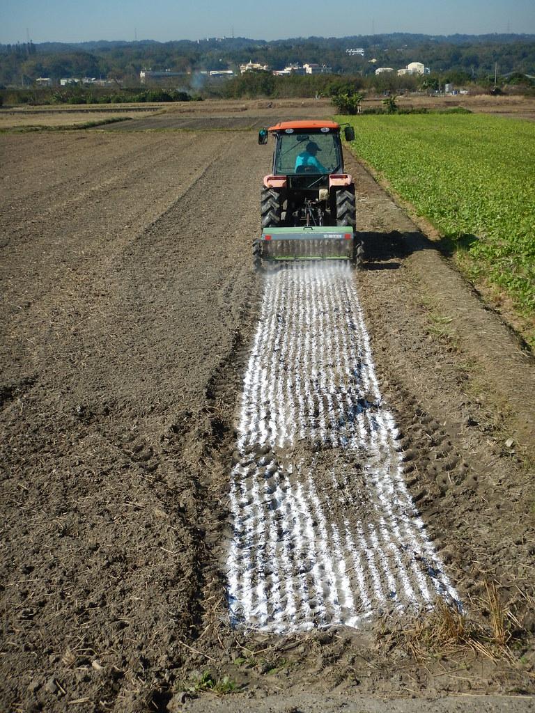 農田施用石灰適度提高土壤酸鹼值可降低作物鎘吸收。林毓雯博士提供
