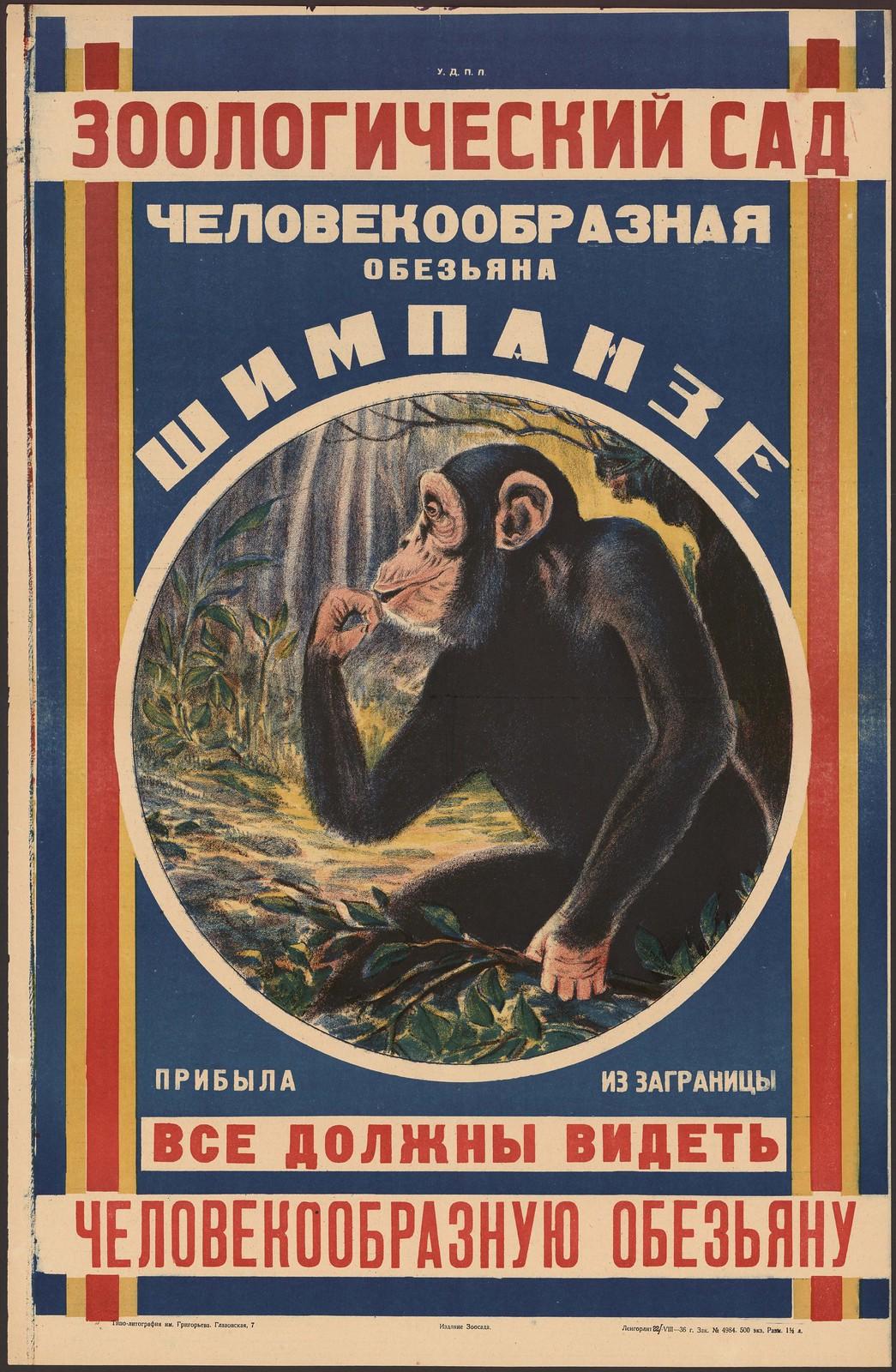 1936. Зоологический сад. Человекообразная обезьяна шимпанзе прибыла из-за границы. Все должны видеть человекообразную обезьяну