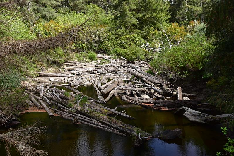 Tahkenitch Creek