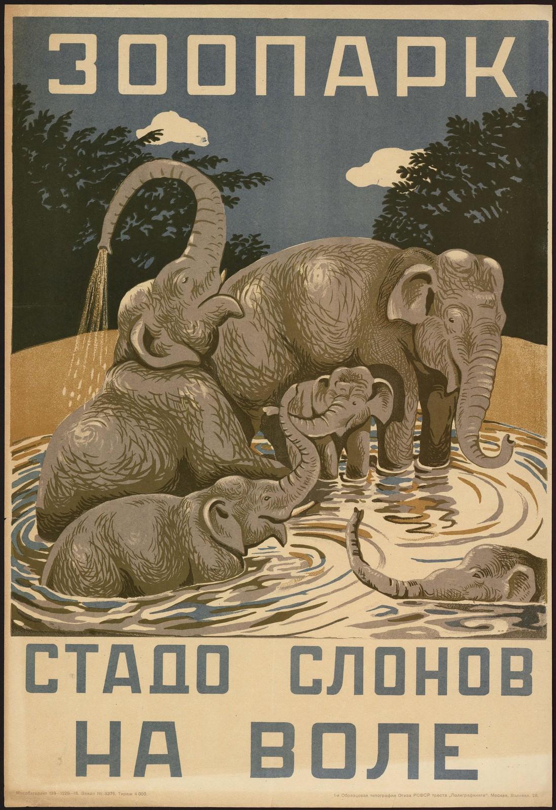 1937. Зоопарк. Стадо слонов на воле