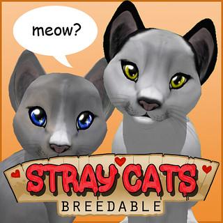 straycats-logo