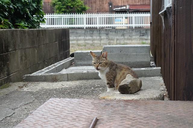 Today's Cat@2019-06-05