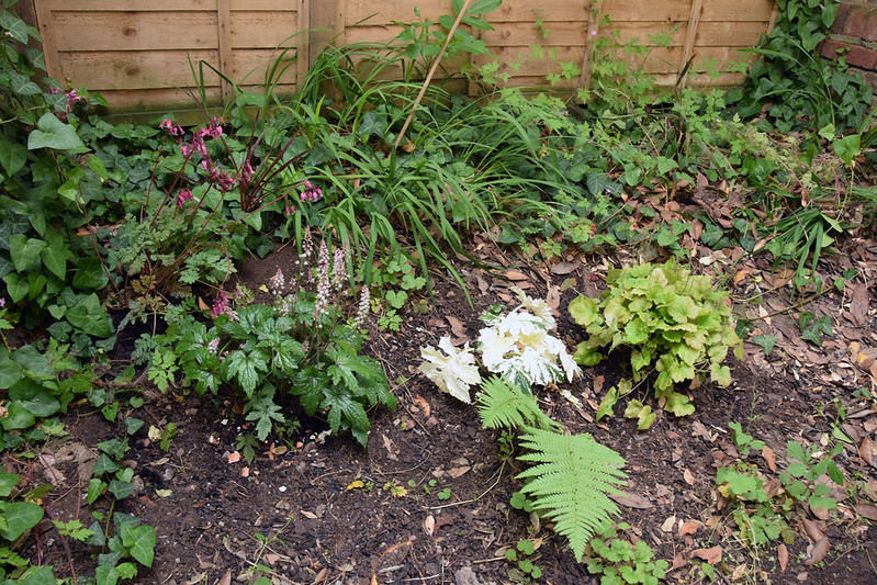 Back bed - third and fourth plants