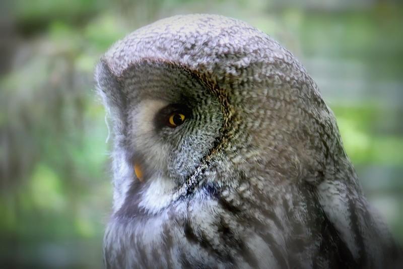 Portrait d'oiseaux - Page 2 48009948613_5147a0d3a6_b