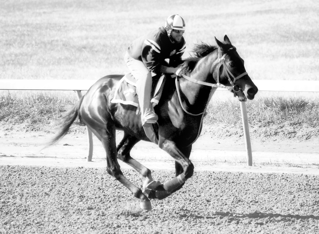 2019-06-05 from 2011-04-14 (108) Will there be horse training at the Bowie track again. Only time will tell. - monochrome