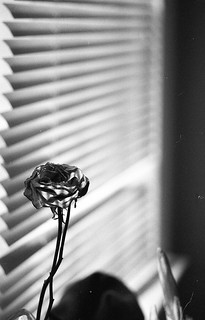 Cinestill Df96 / Rollei RPX 400 | by ericlwoods