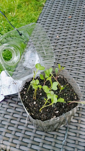 Modifying Mini-Greenhouses for Winter Sowing with Twist-tie Closure