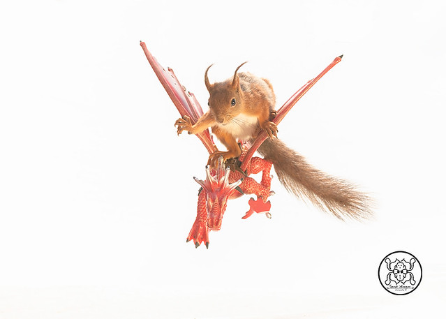 red squirrel standing on a dragon in a white background