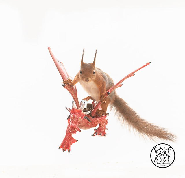 red squirrel sitting on an dragon in a white background
