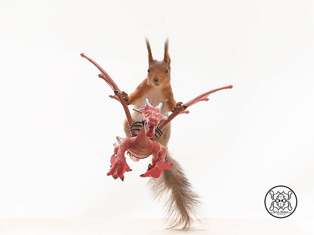 red squirrel sitting on a dragon in a white background