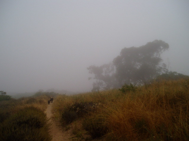 tbt morning fog 9.06