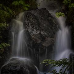 Mount Rainier National Park | SR123
