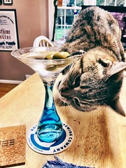 2019 156/365 6/05/2019 WEDNESDAY - NEW THIS FALL: Martini 🍸 and Cat 🐈