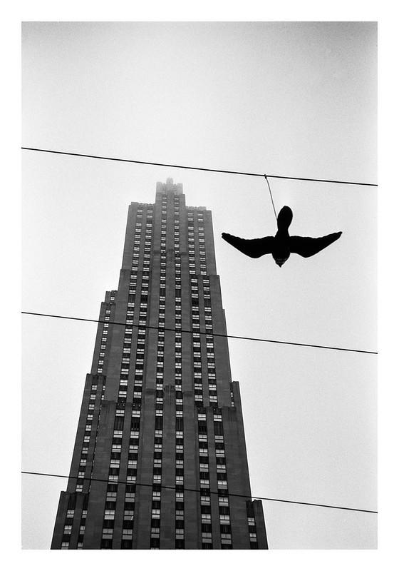 FILM - Bird on a wire