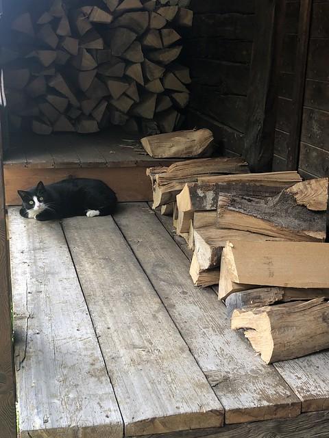 Mignon petit chat n/b rencontré lors d'une promenade aux Crettaux (CH)