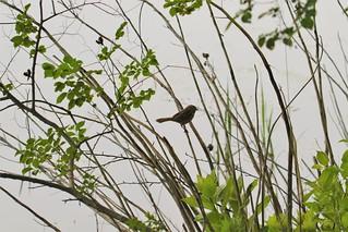 One Little Bird in the Bush
