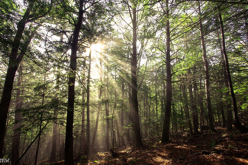 sun rays gilford lockes hill trail forest woods hiking