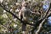 Buteo jamaicensis by ramosblancor