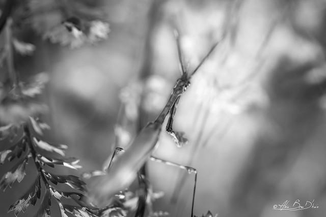 Dans l'ombre de l'affût....! - In the shadow of the lookout ....!