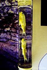 Рыбки из пещеры