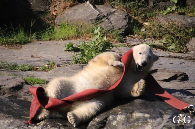 Besuch Tierpark Friedrichsfelde 30.05.201938