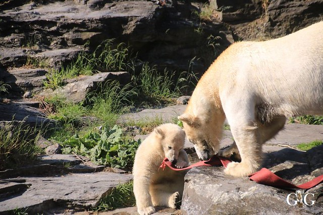 Besuch Tierpark Friedrichsfelde 30.05.201927