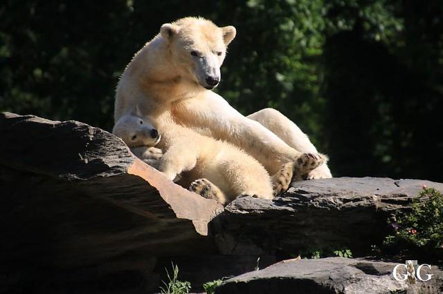 Besuch Tierpark Friedrichsfelde 30.05.201945