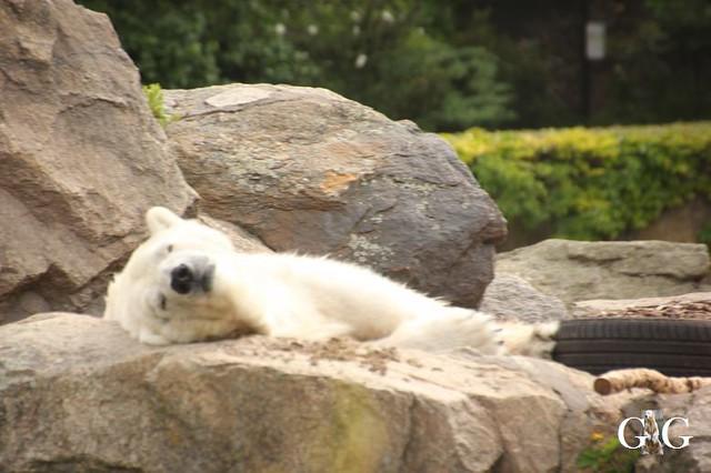 Besuch Tierpark Friedrichsfelde 30.05.20199