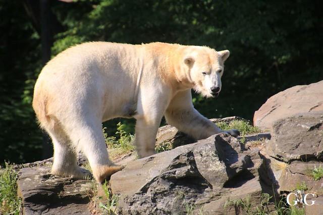 Besuch Tierpark Friedrichsfelde 30.05.201936