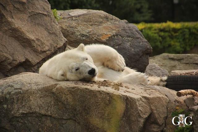 Besuch Tierpark Friedrichsfelde 30.05.201910