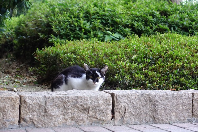 Today's Cat@2019-06-06