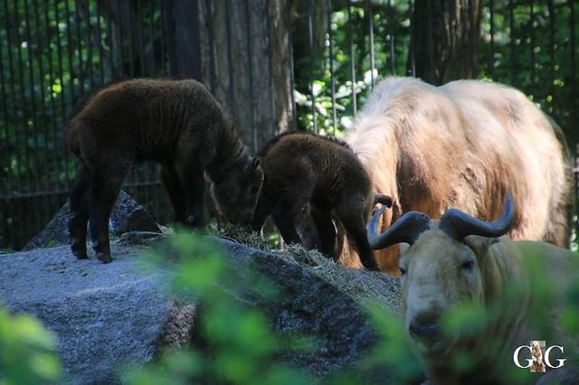 Besuch Tierpark Friedrichsfelde 30.05.201973