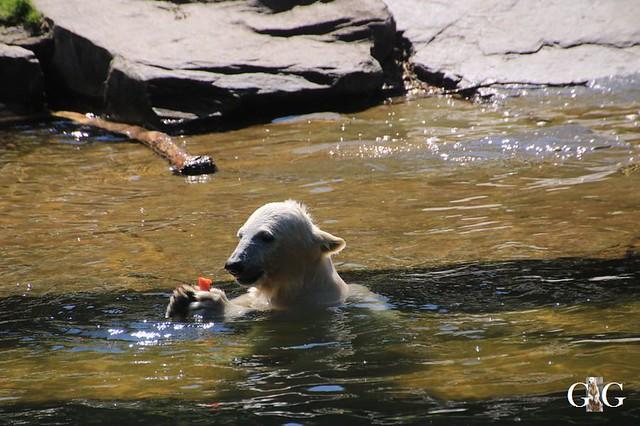 Besuch Tierpark Friedrichsfelde 30.05.201953