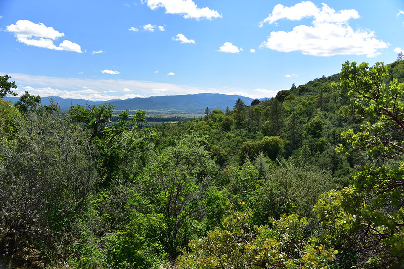 Overgrown view