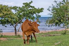 Озеро Малави, северная часть