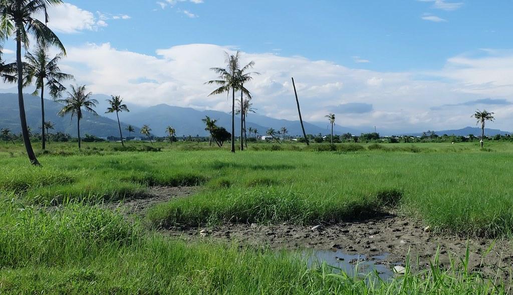 知本濕地植被、土質多元,生物多樣性豐富。攝影:陳文姿。