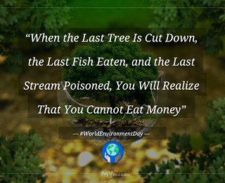 tribute: The Last Tree - quote for Environment Day (english version)