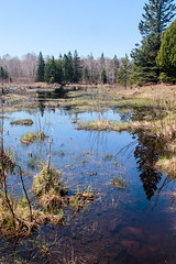 Beaver pond on the Greenstone Trail