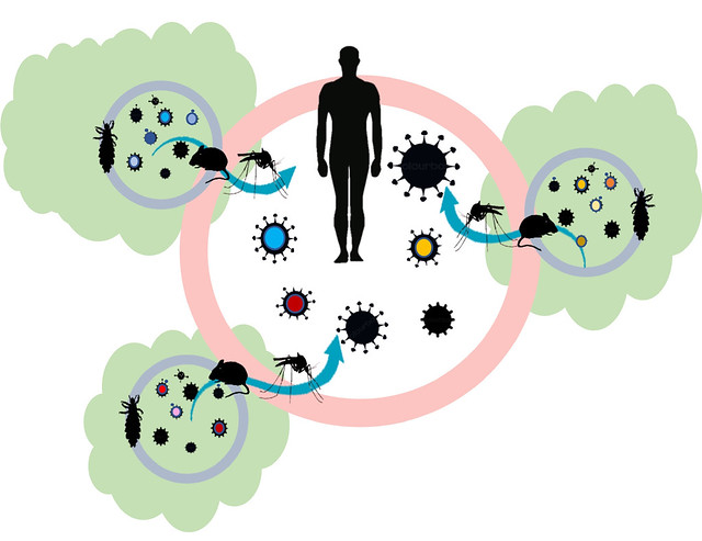A diagram showing how ticks and mosquitoes can move viral particles out of forest fragments