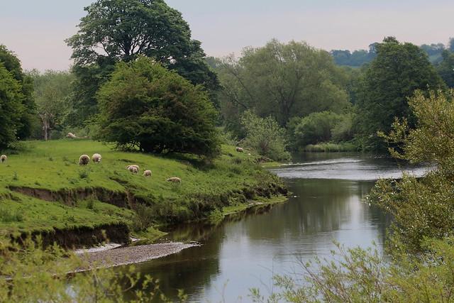 River Wharfe Harewood Leeds
